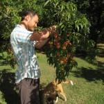 Picking peaches with Sanka